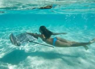 nadar com arraias Ilha de Moorea