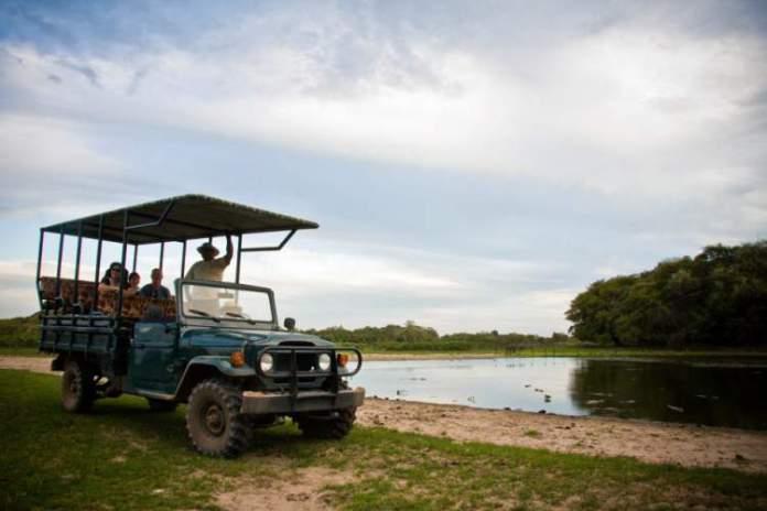 Safáris fotográficos pelo Pantanal é uma das dicas de o que fazer em Mato Grosso