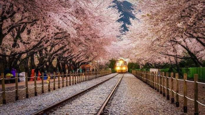 Estação Gyeonghwa na Coréia é um dos lugares que possui as mais belas ruas floridas do mundo
