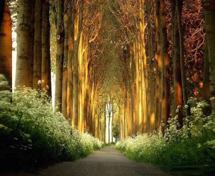 Túnel de árvores na Holanda é um dos lugares que possui as mais belas ruas floridas do mundo