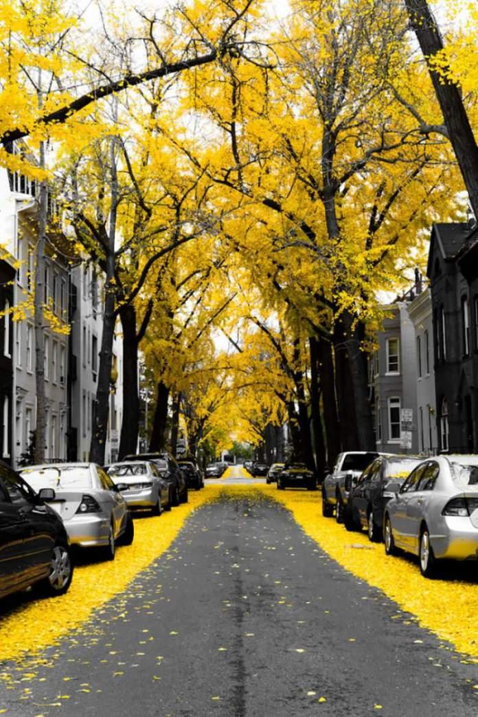 Washington DC EUA é um dos lugares que possui as mais belas ruas floridas do mundo