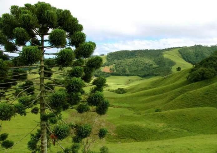 Conhecer o Parque Verner Grinberg é uma das dicas de o que fazer em Monte Verde
