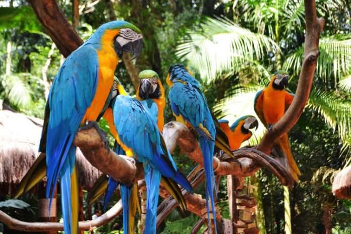Parque das Aves é um dos pontos turísticos próximos as Cataratas do Iguaçu