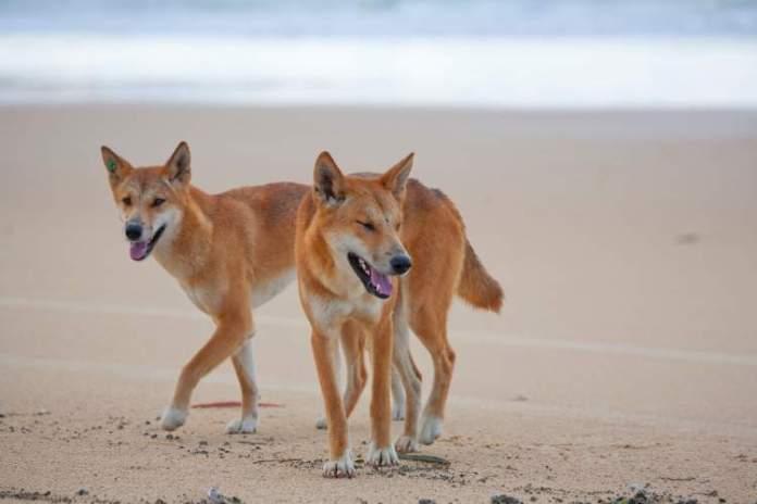 Praia Fraser Island na Austrália é uma das praias mais perigosas do mundo