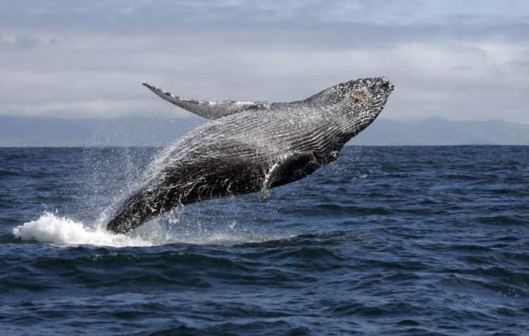 Abrolhos é um dos destinos no Brasil para ver animais em estado selvagem