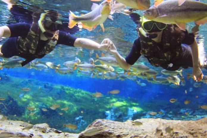 Aquário Natural Rio Baía Bonita em Bonito