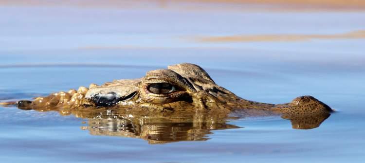 Meandros do Araguaia é um dos destinos no Brasil para ver animais em estado selvagem