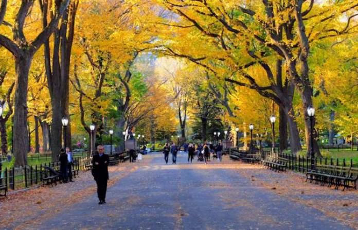 O que fazer em Nova York Visitar o Central Park