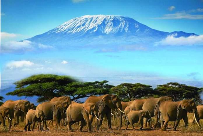 Safári na África na Reserva de Amboseli