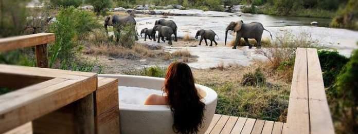 Safári na África no Kruger National Park