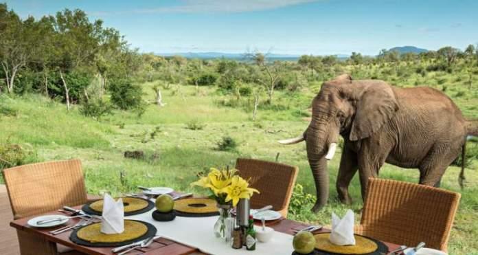 Safári na África no Madikwe Game Reserve