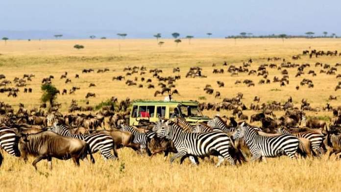 Safári na África no Serengeti National Park