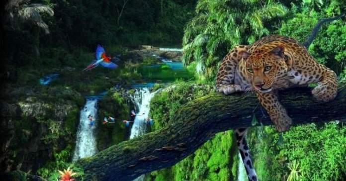 Amazônia é um dos Destinos Perfeitos Para Quem Gosta de Aventura