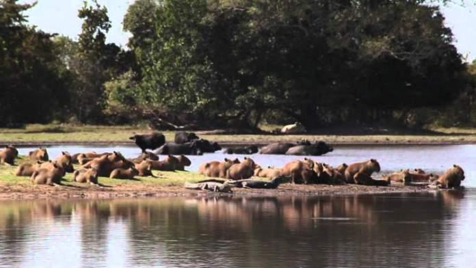 Pantanal é um dos Destinos Turísticos para Quem Busca Contato com a Natureza