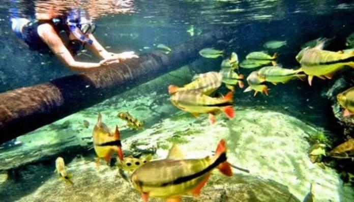 Rio Triste é um dos Destinos no Brasil com Águas Cristalinas