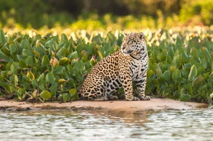 Pantanal é um dos destinos baratos para viajar em outubro de 2019
