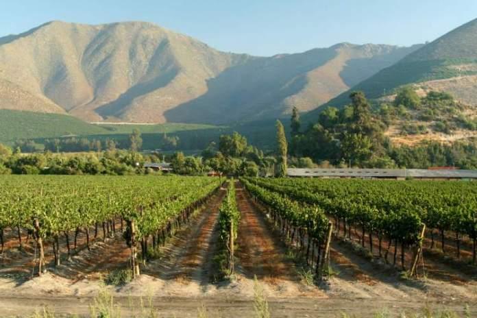 Melhor época para ir ao Chile com foco nas vinícolas