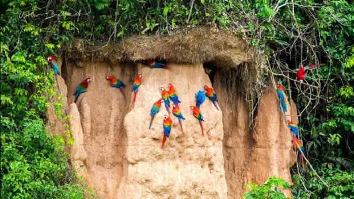 Melhor época para ir ao Peru e conhecer a Reserva Nacional de Tambopata
