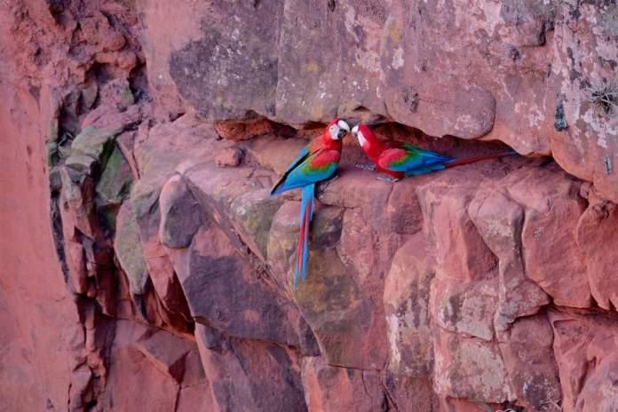 Buraco das araras é um dos pontos turísticos de Bonito - MS