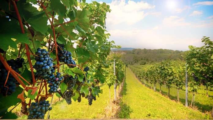 Melhores vinícolas do Chile