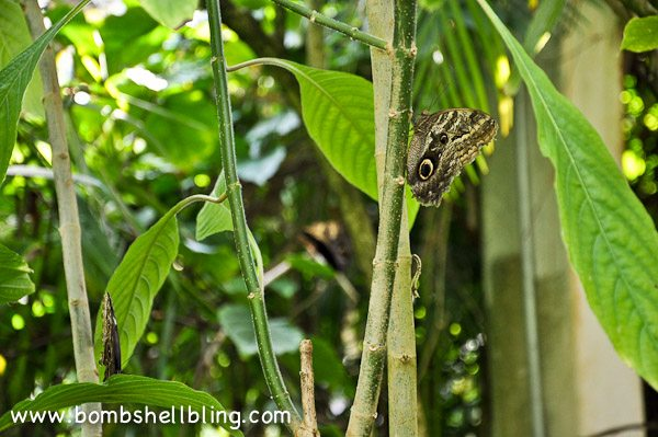 Butterfly House 2013-15