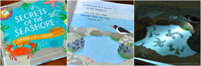 books for kids Secrets of the Seashore collage