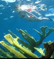 Snorkal & Coral