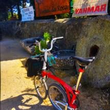 Bike at Garden Shop