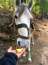 Feed the horse an apple core