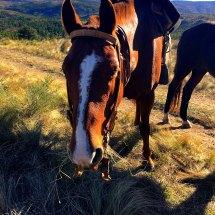 1Gaucho life horse
