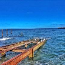 Cormorants on the bay