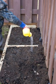 Watering the soil after planting. Yellow watering can.