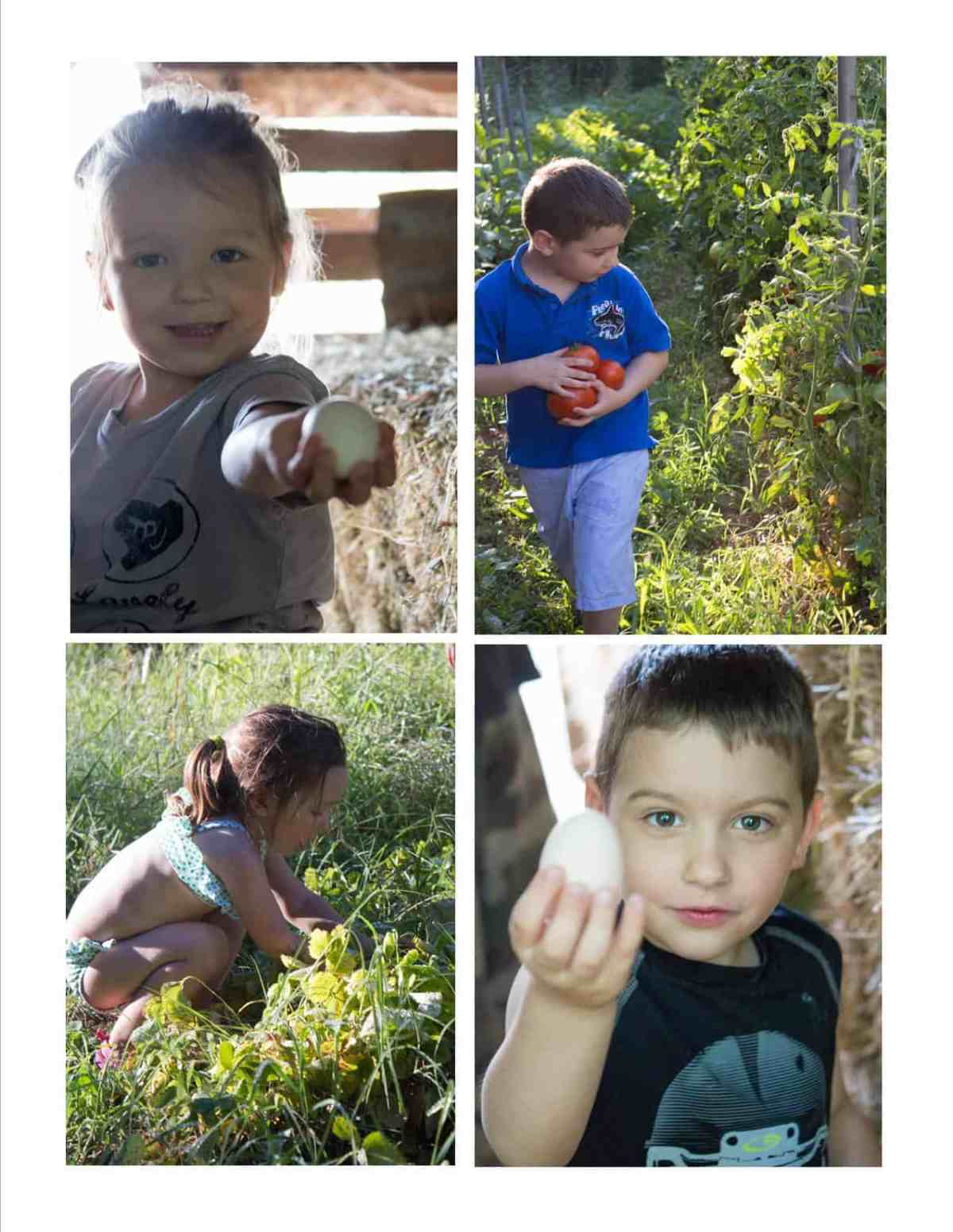4 pictures of kids, boy and girl picking up fresh eggs and tomatoes. Summer in Provence, France.
