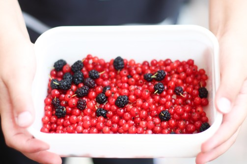 Little hands holding rectangular white container filled with red currants