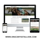 Dracarys Stallion Website Display