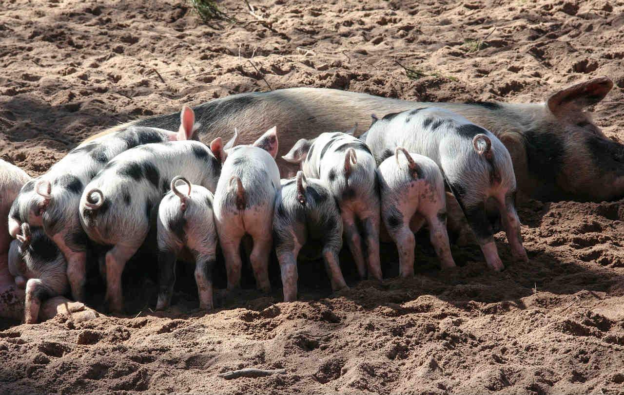 Er Bondens Marked økologisk?