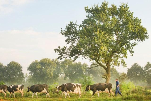 Northern Friesian Woodlands Association (Noardlike Fryske Wâlden)