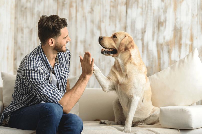 Bone Broth for dog