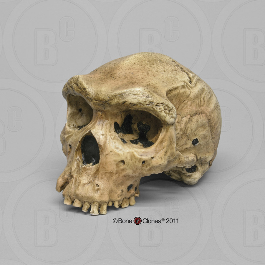 Dating skelet toetsen