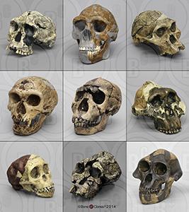 Bone Clones hominid set