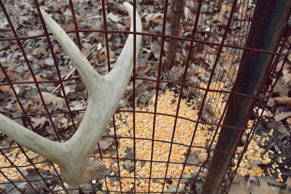 Deer Antler Shed Traps