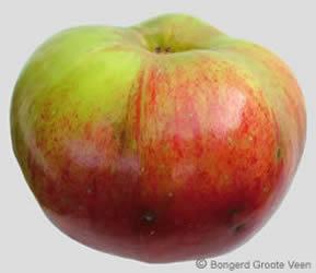 Bramley's Seedling appel