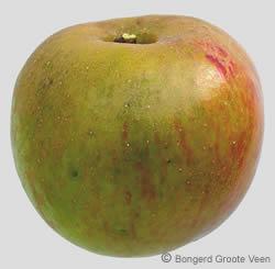 Schone van Boskoop vrucht