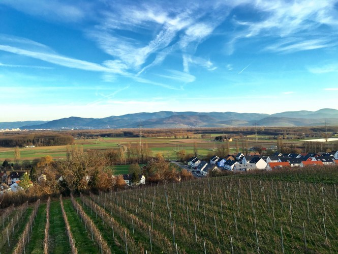 Baden wine region Freiburg Germany lookout view vine yard