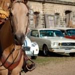 Cheval avec trois voitures de collection, dont une Mustang en arrière-plan