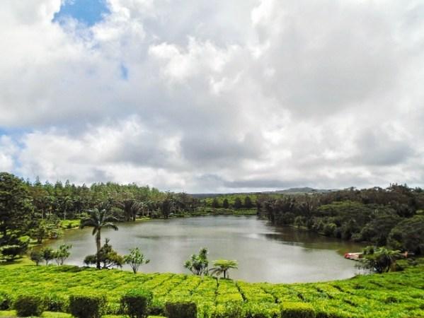 Bois Cheri - Plantation de Thé
