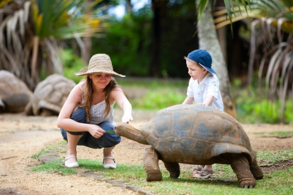 Giant Tortoises at La Vanille Réserve des Mascareignes