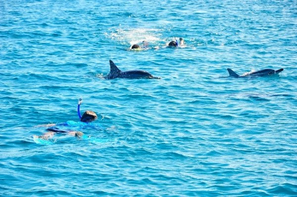Swim with Dolphins, Mauritius - Nage avec Dauphins, Ile Maurice