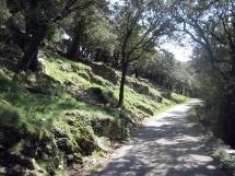 Route-departementale-vers-le-Bosc