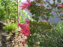terrasse_fleurie